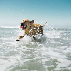 Petstore.com likes Hunting Island State Park in South Carolina - a lot of activities to do with your pet. Explore through the hiking trails and maritime forests of have fun under the sun in the beaches.