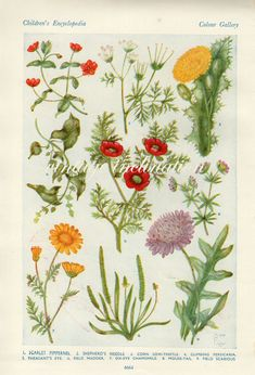 Vintage flower print 1938 antique red yellow by VintageInclination