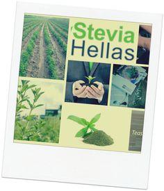 Agriculture Cooperative <>  website:  stevianet.gr