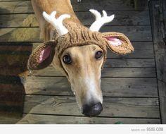 dog costume-christmas