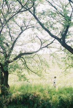-kokoro:  Green by