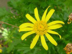 Flower (Yellow#3)