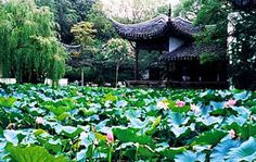 Chinese Plants, Chinese Garden, Image