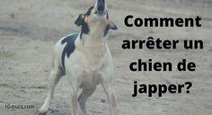 Remark arrêter un chien de japper? I Love Dogs, Puppy Love, Pets Online, Cairn Terrier, Pembroke Welsh Corgi, Working Dogs, Goldendoodle, Border Collie, Animals And Pets