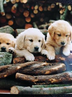 Super Cute Puppies, Baby Animals Super Cute, Cute Baby Dogs, Cute Little Puppies, Cute Dogs And Puppies, Cute Little Animals, Cute Funny Animals, Cute Puppy Photos, Cute Animal Photos