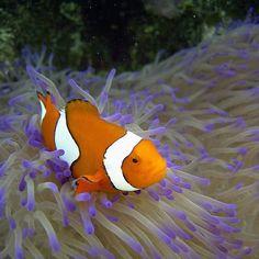 Great Barrier Reef  #pickoftheday #instagood #instagram #photooftheday #queensland #visitqueensland #backpacking #worldplaces #exploreaustralia #australia #seeaustralia #greatbarrierreef #reef #fish #ocean #discoverqueensland by helenchristoffersen http://ift.tt/1UokkV2