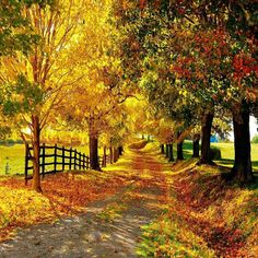 Travelling on the countryside road is a great pleasure and turns your mood in peaceful because of both side of the road you can see the green natural scenery. You want to save beautiful countryside road photography Foto Nature, Image Nature, Nature Photos, Nature Hd, Nature Images, Nature Tree, Images Wallpaper, Nature Wallpaper, Fall Wallpaper