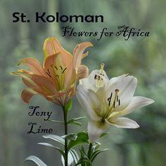 Albertshofen Lime, It Cast, Africa, Ghana, Trends, Island, Flowers, Plants, Bhutan