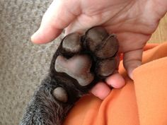Why the big paws?