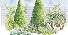 Peittävä kasviryhmä auttaa meluaidan, parkkipaikan tai muuten ankean näkymän piilottamisessa. Tutustu Viherpihan istutussuunnitelmaan ja istuta peittäviä puita, pensaita ja köynnöksiä.