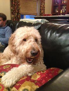 Here is CT State Representative Matt Ritter's dog Dublin.  Rep. Ritter represents Hartford.