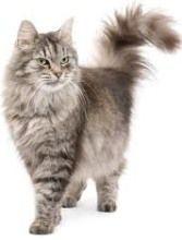 des recettes naturels  de répulsif pour éloigner les chats