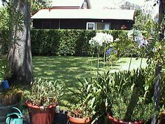 Kays Studio Fully Self Contained, a Berry Studio Berries, Cottage, Australia, Studio, Plants, House, Home, Cottages, Haus