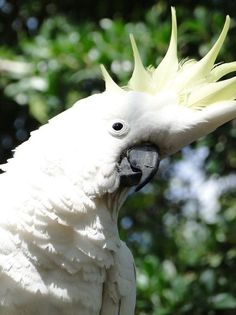 Photo by danikatz Cockatoo, Bird Species, Wild Birds, Gold Coast, Wildlife, Queensland Australia, Live, Animals, Facebook