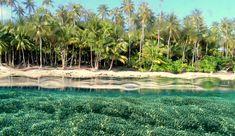 Kepulauan Padaido, Kabupaten Biak