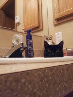My Kitty in the sink. New Hobbies, Sink, Kitty, Sink Tops, Little Kitty, Kitten, Sinks, Vanity, Cats