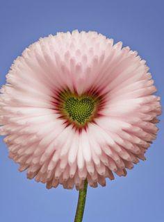 Valentine's day flower!