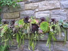 Old Country Gardens: Succulents