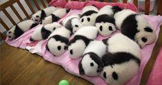 Shhhhh baby panda nursery