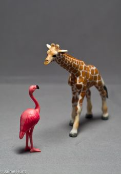 flamingo meets giraffe