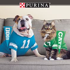 You could score big for your biggest fans! Play the Purina(R) Prize Bowl through February 11 for a chance to win a Dyson DC50 Animal Vacuum, luxurious pet products or game-changing Purina(R) coupons! With more than $25,000 in FANtastic prizes on the line, you've got to make your play today at PureLoveForPets.com