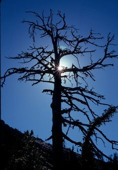 Google Image Result for http://www.alanbauer.com/images/Patterns%2520in%2520Nature/Cross-Tree%2520silhoette.jpg