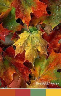 The Colors of Autumn. Click to see paint color names.