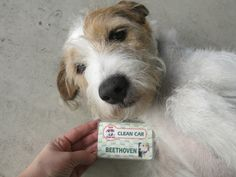 Com crachá personalizado, cachorro vira frentista em posto de Santos, SP (Foto: Anna Gabriela Ribeiro/G1)