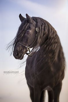 Black Beauty by Monika Bogner - Photo 100178643 - 500px