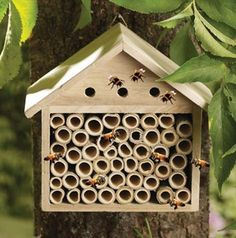 Kleeneze Shop. Bee Rest Kleeneze Shop http://www.kleenezeshop.com/products/2423-bee-rest.aspx?AffiliateId=30#