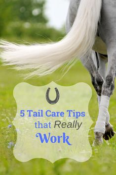 Even a horse without the best tail genetics can still benefit from good grooming techniques and special attention. If you have ever wished your horse could grow a luxurious, beautiful tail and don't know where to start or have tried and given up, give these five tips a try!