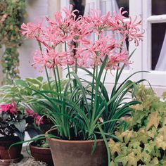 Top garden advice from Johnstown Garden Centre, Ireland's leading Garden Centre Bulb Flowers, Love Flowers, Flower Pots, Beautiful Flowers, Container Plants, Container Gardening, Garden Planters, Garden Bulbs, Dream Garden