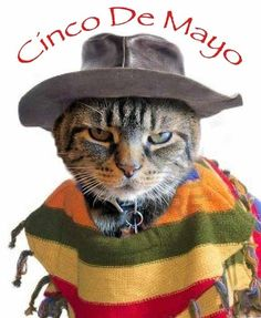 Cinco De Mayo for sure! Cool Pictures, Funny Pictures, Funny Pics, Pet Costumes, Four Legged, Embedded Image Permalink, Cute Cats, Your Pet, Funny Animals