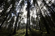 I cant see the wood by sparkione, via Flickr