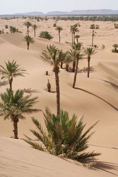 [New] The 10 All-Time Best Home Decor (in the World) - Mood Desert Dream, Desert Life, Desert Oasis, Desert Photography, Travel Photography, Beautiful World, Beautiful Places, Desert Places, Deserts Of The World