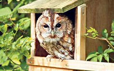 The best bird boxes for your garden