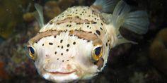 Peixes marinhos podem ficar embriagados com CO2 | AquaA3 Aquarismo