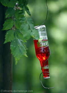 HOMEMADE HUMMING BIRD FEEDER. - so simple. I have got to try this. :)