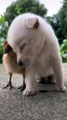 Baby Animals Pictures, Cute Animal Videos, Cute Animal Pictures, Cute Funny Puppy Videos, Super Cute Puppies, Cute Baby Dogs, Cute Little Animals, Cute Funny Animals, Cutest Animals