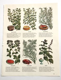 What spice should noelle use to solve a household problem. Ie fertility. Retro Kitchen Decor, Kitchen Art, Branch Drawing, Retro Ads, Vintage Cookbooks, Culinary Arts, Art Pictures, Photos, Botanical Prints