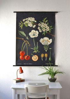 Vintage school pull down chart map cherry flower botanical West German biology print Jung Koch Quentell