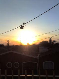 Por do sol + maritacas + um par de tênis...