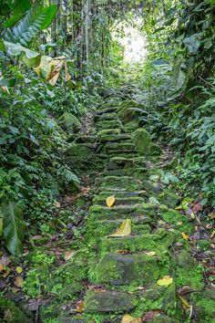 A flight of 1200 stone steps leads up from the Buritaca River to the Lost City itself.