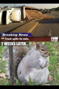 Wat als.... Een vrachtwagen zijn vracht noten verliest...😁