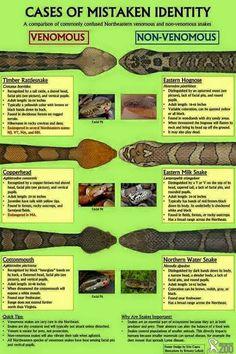 Snakes, mistaken identity