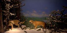 https://flic.kr/p/TNYQBU   DSC_0031.NEF   Museu da história natural de Santiago do Chile.