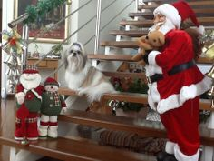Tagore em ritmo de Natal!