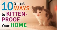 Here are a few suggestions to keep your kitten safe from harm, and your home and belongings safe from kitty-damage. http://healthypets.mercola.com/sites/healthypets/archive/2015/01/05/kitten-proof-home.aspx