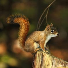 Community Post: 25 Photos Of The Ever Underrated And Adorable Squirrel