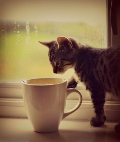 I have to guard my coffee cup from my cat.  He loves to casually wander over and tip it over with his paw.